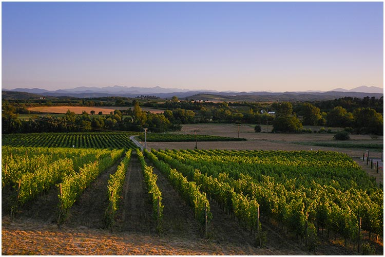 Winery-Photography-by-Sian-James-01