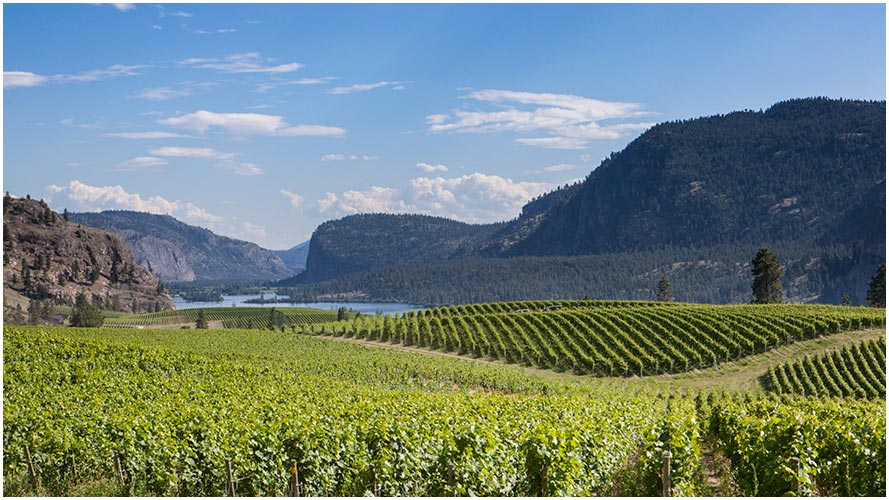 Winery-Photography-by-Sian-James-06
